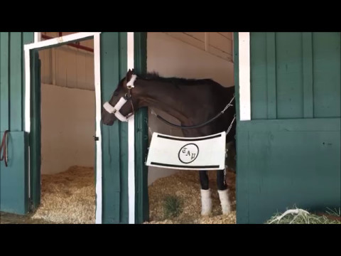 Always Dreaming arrives at Pimlico.