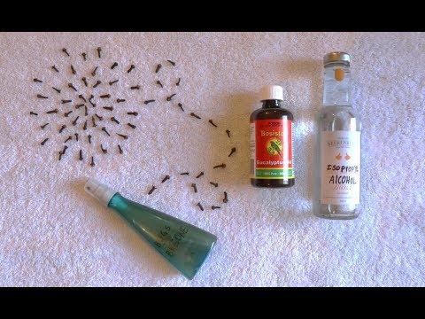 Easy DIY Insect Repellent : Zero Waste