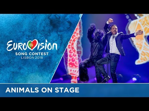 Animals on the Eurovision stage!