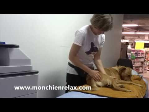 Massage canin en espace public