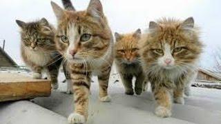 Приколы с котами!!! Смотрите на бешеных котов. Очень страшно!!!