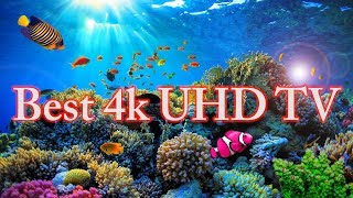 Aquarium video 4k  मछलीघर