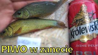 Liny lubią alkohol - piwo do zanęty - ryby pija alkohole