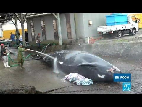 Japón podría retomar la caza de ballenas