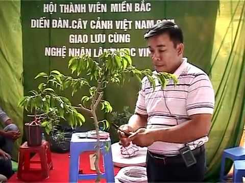 Nghệ nhân LNVinh hướng dẫn kỹ thuật tạo hình Bonsai P1.16 - Technical sharing trimming bonsai