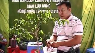 Nghệ nhân LNVinh hướng dẫn kỹ thuật tạo hình Bonsai- P1/16* alomua.vn, huongsacdatviet.com