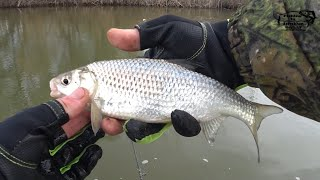 ВОБЛА. Рыбалка в Астраханской дельте. СУМАСШЕДШИЙ КЛЁВ!!!