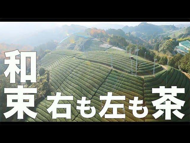 【和束・京都#162】「右も左も茶畑」空撮・たごてるよし_Aerial_TAGO channel