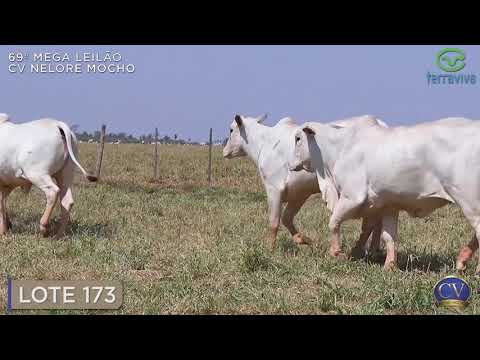 LOTE 173