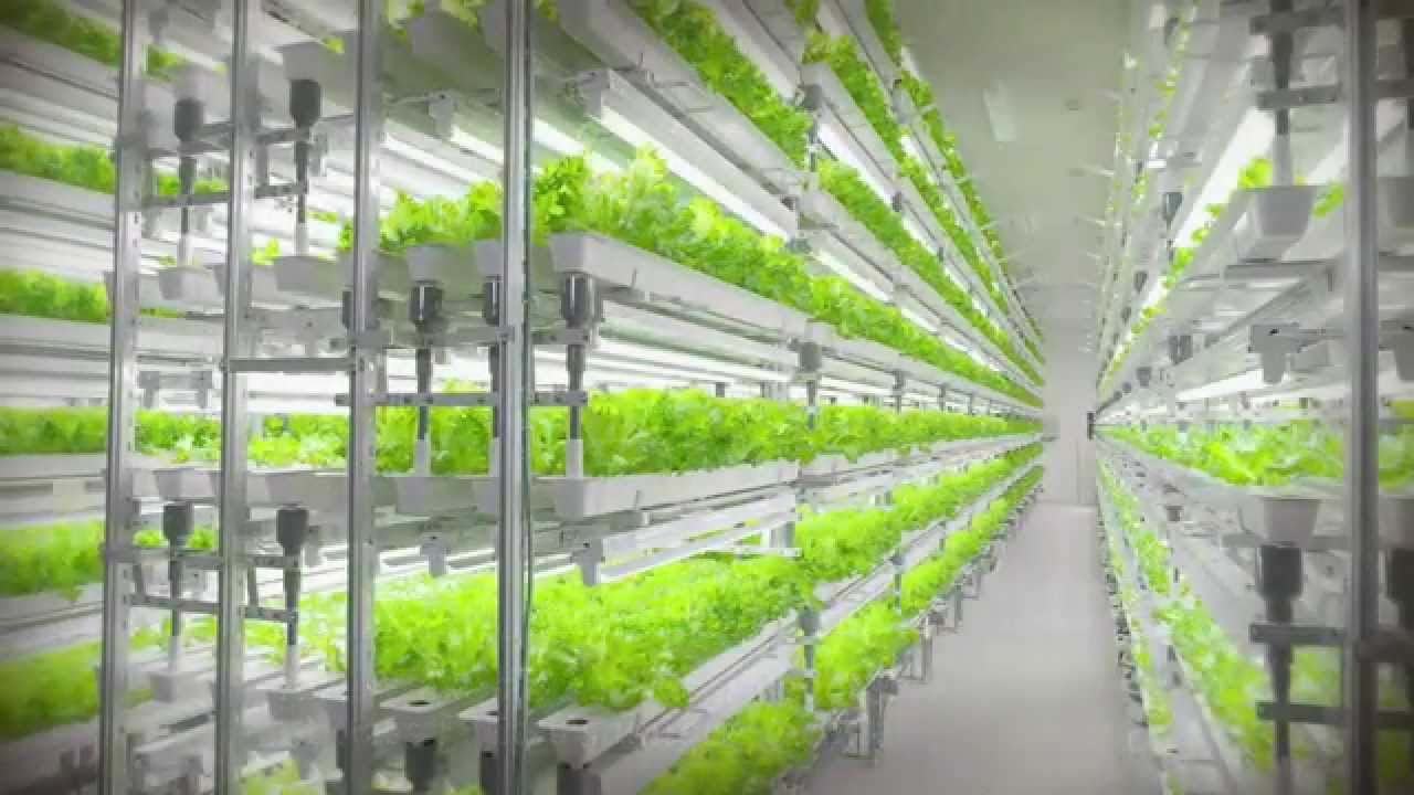Aizu Wakamatsu Akisai Vegetable Factory Digest Youtube