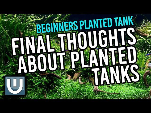 Planted Tanks Beginners - Final Thoughts   Part 4