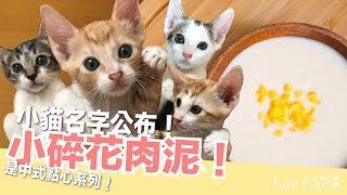 小貓名字大公開!長大來離乳囉~小碎花肉泥!【貓副食食譜】好味貓廚房EP103