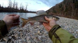 Таёжная рыбалка в ХАКАСИИ ЛОВЛЯ ХАРИУСА Ночёвка у реки