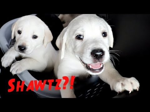 PUPPIES GO TO THE VET FOR THEIR FIRST CHECK UP!