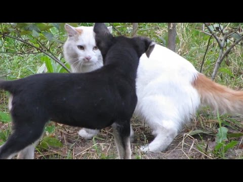 Cats do not want to play with feral the puppies