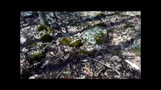 Crusher Ridge - Shenandoah National Park