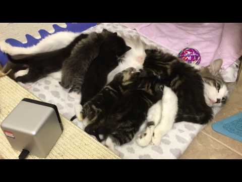 Kitten Sits on Momma Cat's Head! Amazon Wishes Granted!