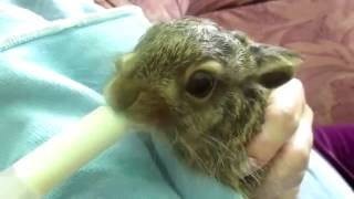 Breeding rabbits aged 2 days to 2 months (provided you can guess what happenend next )