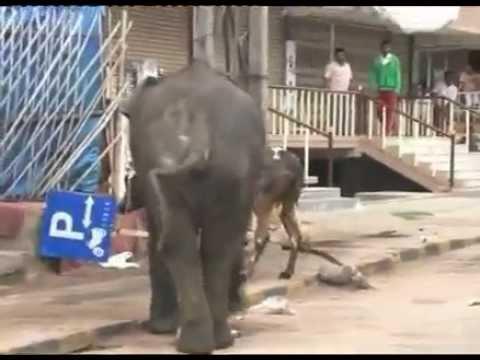 elephant attack in kerala 2018 - YouTube  Kerala Elephant Attack Youtube