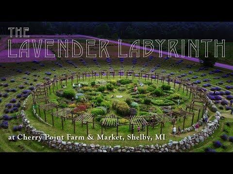 The Lavender Labyrinth | Cherry Point Farm & Market - Shelby, Michigan