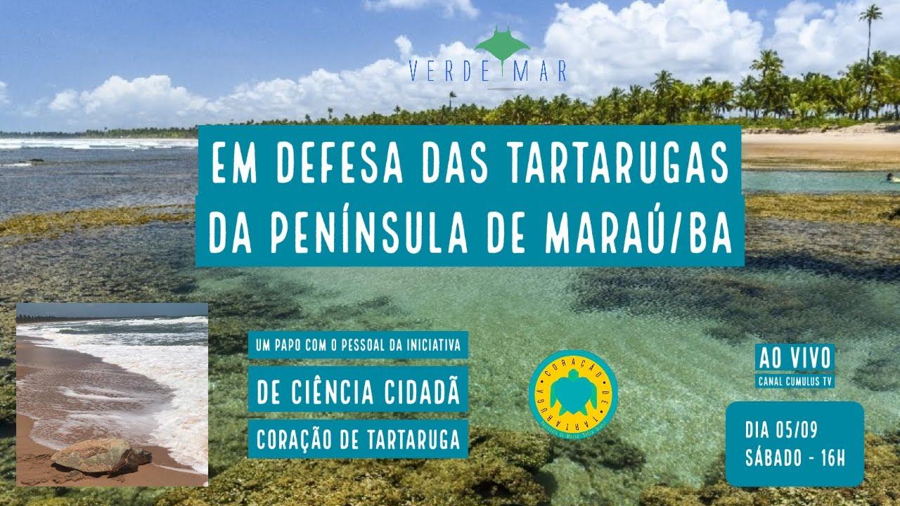 Campanha pela conservação de tartarugas marinhas na Península de Maraú, na Bahia