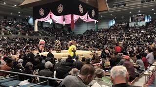 大阪春場所、十枚目 安美錦 対 明瀬山の一戦を見ました、すごい歓声です...