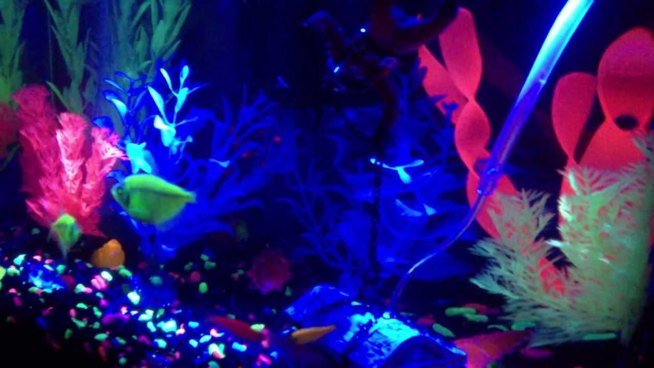 JAK's Tetra GloFish 5 Gallon Aquarium 3 2013 - YouTube