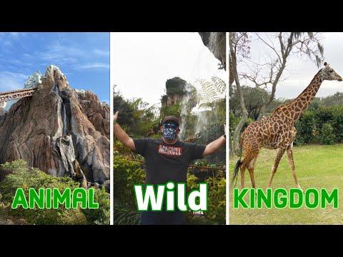 Disney's Animal Kingdom | Safari, Everest and Cheeseburger Pods