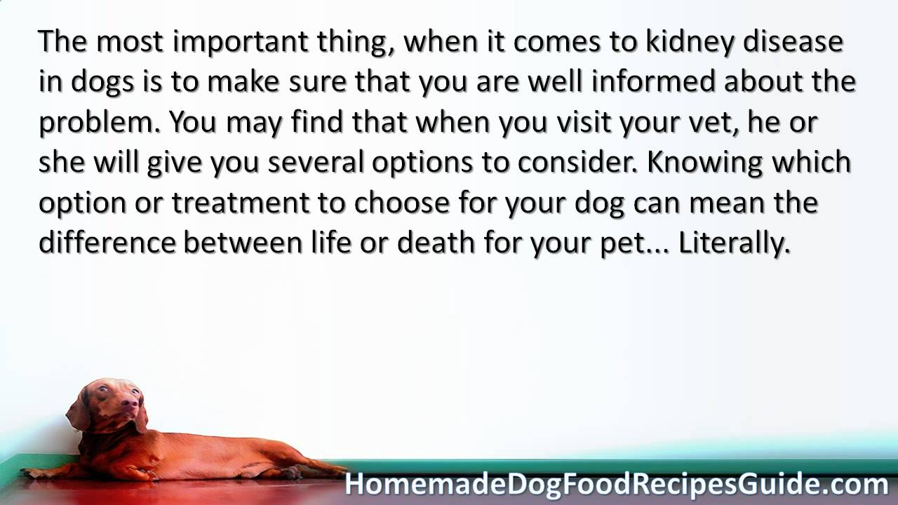 Dog food recipes for dogs with kidney disease youtube dog food recipes for dogs with kidney disease forumfinder Image collections