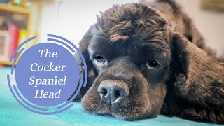 Grooming the Cocker Spaniel Head | Master Groomer Talks You Through Some Simple Steps