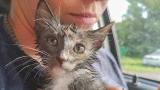 Котенок просил о помощи он обрадовался что его нашли Спасаем Пеструшу kitten asks for help