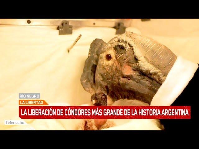 La liberación de cóndores más grande de la historia argentina