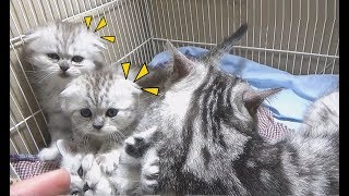 Two Kittens Want To Go Outsite The Cage | Meo Cover Home !