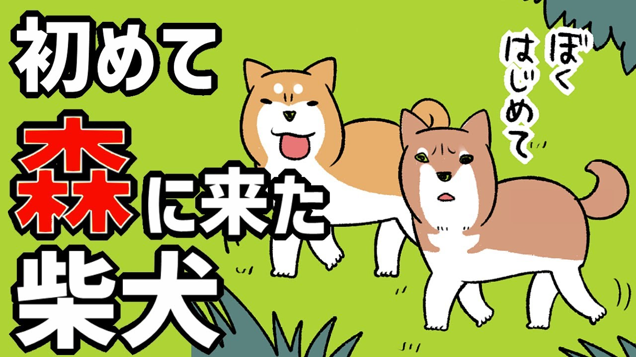 【犬まんが】はじめて森に来た柴犬の反応