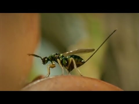 Life of Insects  Attenborough: Life in the Undergrowth  BBC