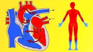 Предотвратить инфаркт, инсульт и приступы стенокардии поможет всего 1 продукт