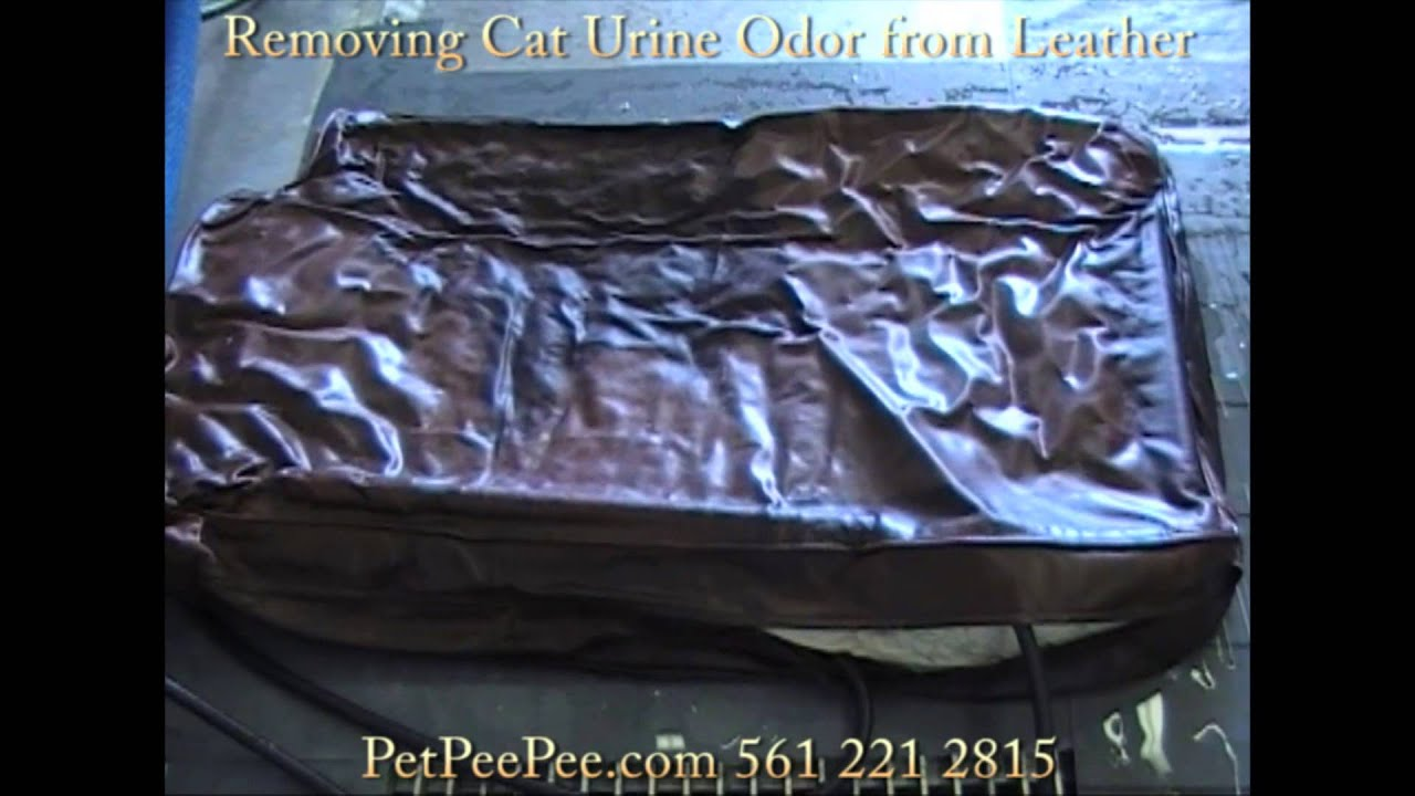 Removing pet urine from leather furniture
