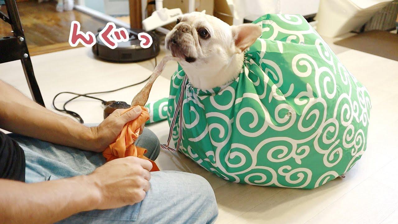 なにコレ?🤷🏻♂️ドライヤーが苦手な犬におすすめのドライハンバンを試してみたら