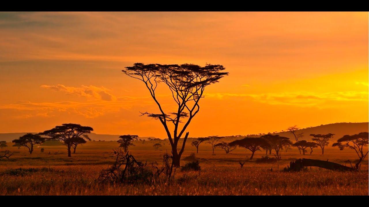Les animaux de la savane africaine youtube - La savane dessin ...