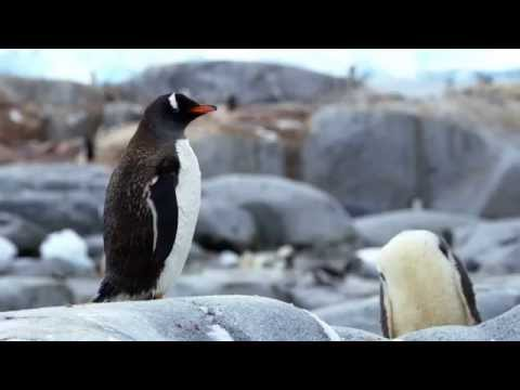 Destination Antarctica – Photo Opportunities