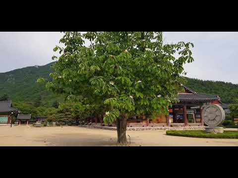 119  일본목련 Magnolia obovata