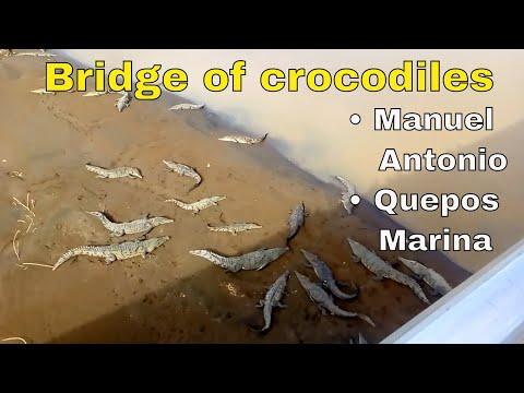 Crossing the Bridge of Crocodiles in Costa Rica