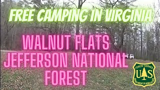 Awesome Free camping at Walnut Flats in the Jefferson National Forest VA