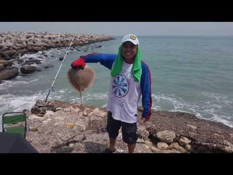 Stingray fishing in Salmiya Kuwait صيد لخمه في السالمية الكويت