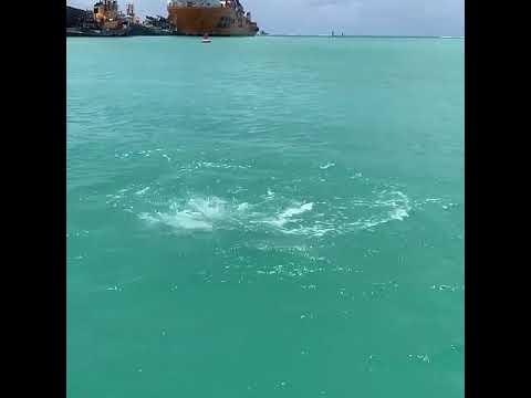 ST. CROIX INSHORE FISHING CHARTERS