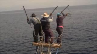 Pesca albacora taltal chile 2016 temporada al palo paolanmilu 297