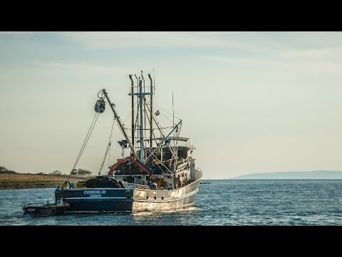 Climate Change Affects Fisheries