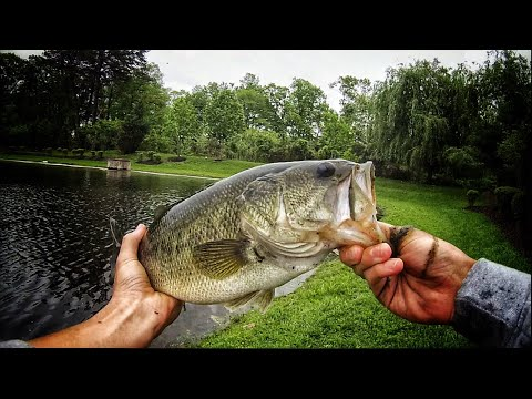 Post-spawn Bass Fishing In A NEW Pond| Voorhees, NJ |