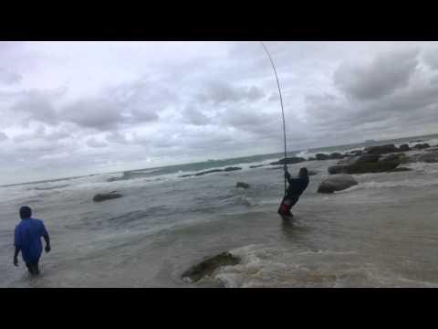 Fisherman catches a shark in Durban, Umhlanga Rocks Beach