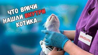 Спасение котика с раной на шее. Еще одна операция. Нашли инородный предмет / SANI vlog